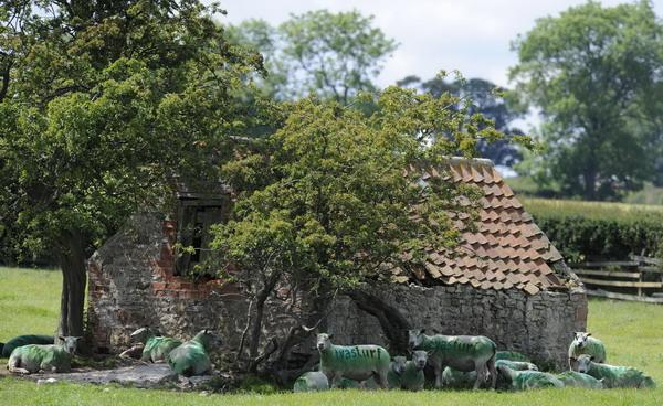 Un-fermier-isi-foloseste-oile-pe-post-de-panouri-de-publ_002