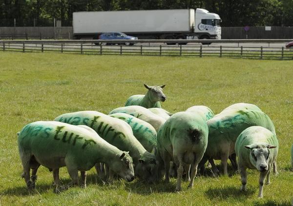 Un-fermier-isi-foloseste-oile-pe-post-de-panouri-de-publ_003