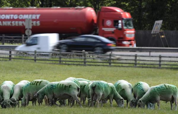 Un-fermier-isi-foloseste-oile-pe-post-de-panouri-de-publicit