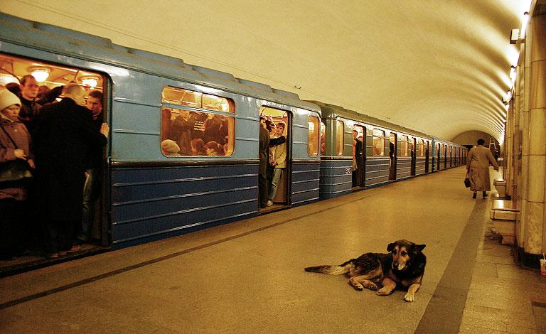 In-Rusia-cainii-calatoresc-cu-metroul-zuf_003