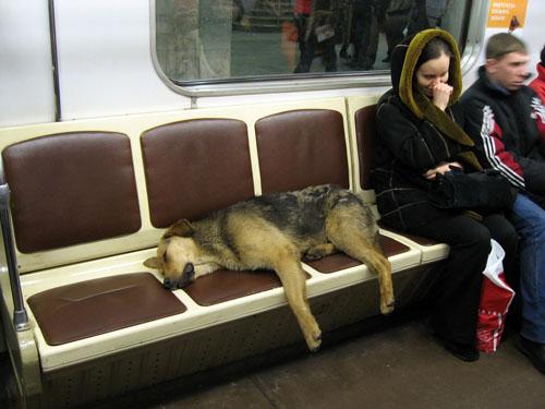 In-Rusia-cainii-calatoresc-cu-metroul-zuf_005
