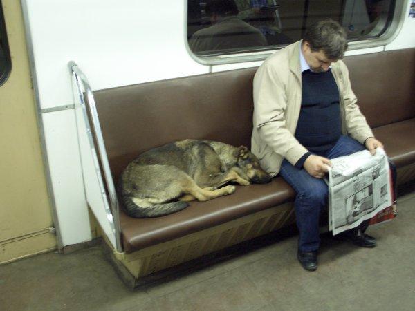 In-Rusia-cainii-calatoresc-cu-metroul-zuf_006