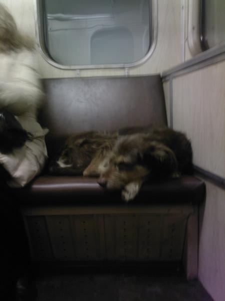 In-Rusia-cainii-calatoresc-cu-metroul-zuf_008