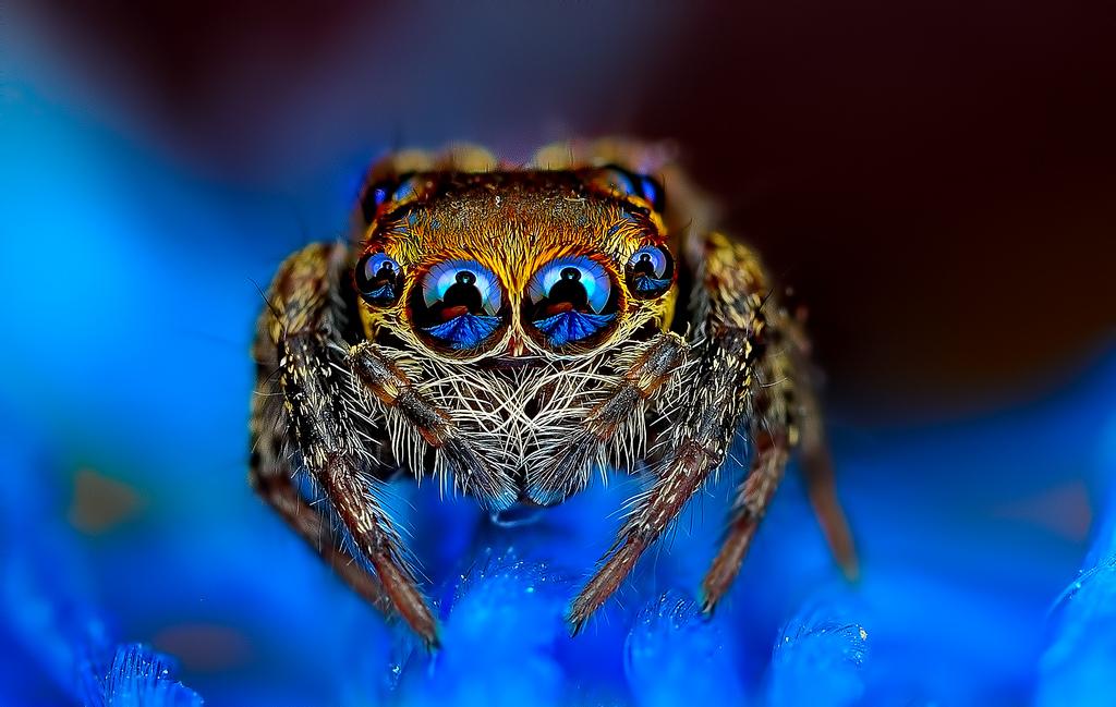 Ochi de paianjeni - Fotografii macro hipnotizante_zuf.ro_ (1)