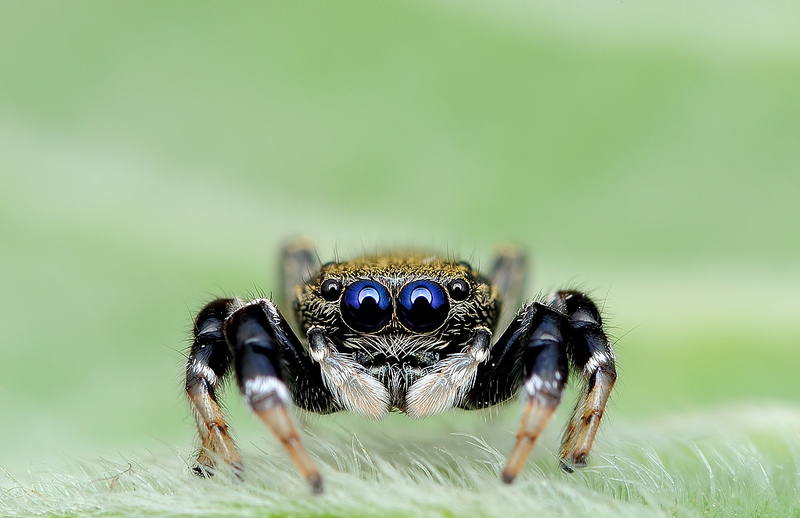Ochi de paianjeni - Fotografii macro hipnotizante_zuf.ro_ (10)