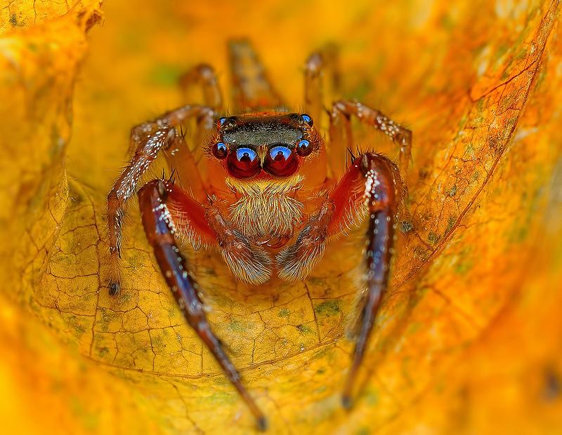 Ochi de paianjeni - Fotografii macro hipnotizante_zuf.ro_ (3)