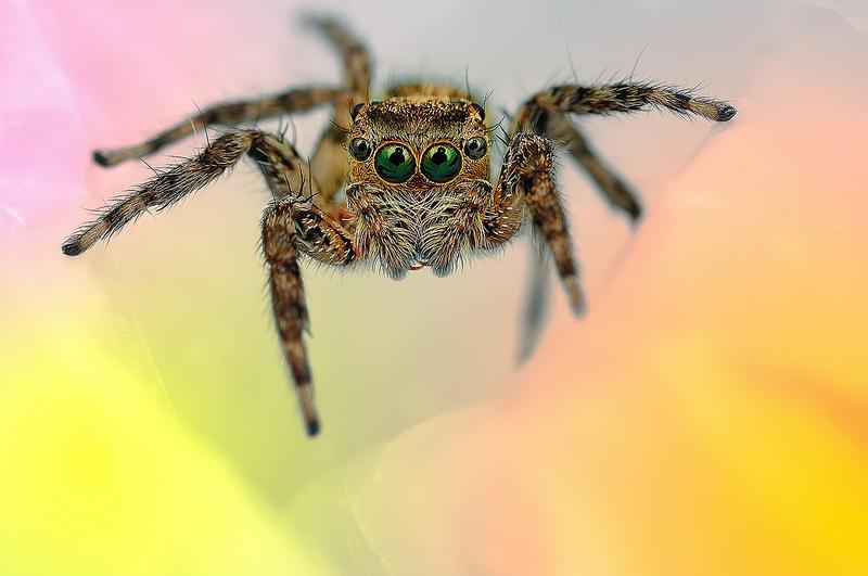 Ochi de paianjeni - Fotografii macro hipnotizante_zuf.ro_ (4)