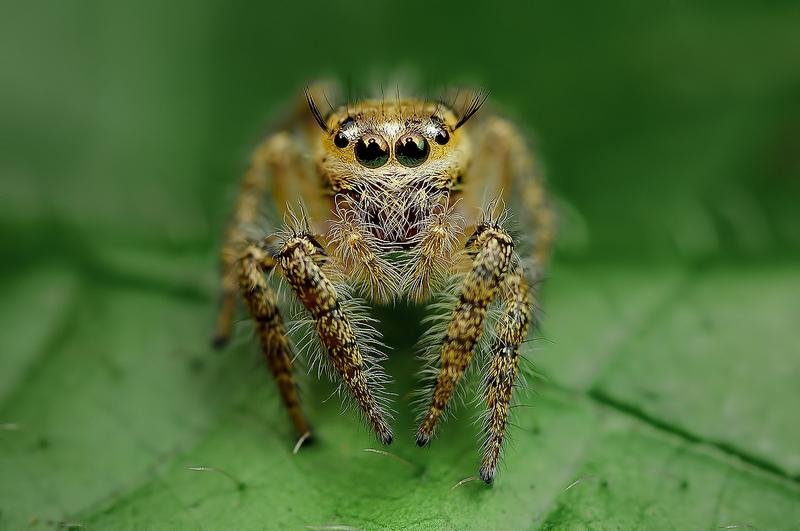 Ochi de paianjeni - Fotografii macro hipnotizante_zuf.ro_ (6)