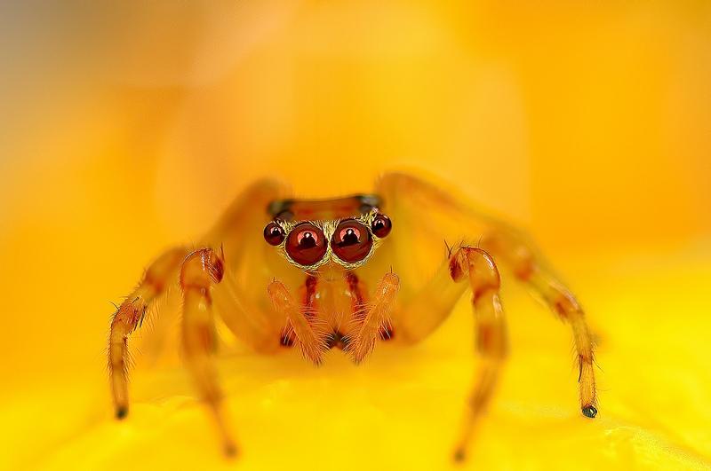 Ochi de paianjeni - Fotografii macro hipnotizante_zuf.ro_ (8)