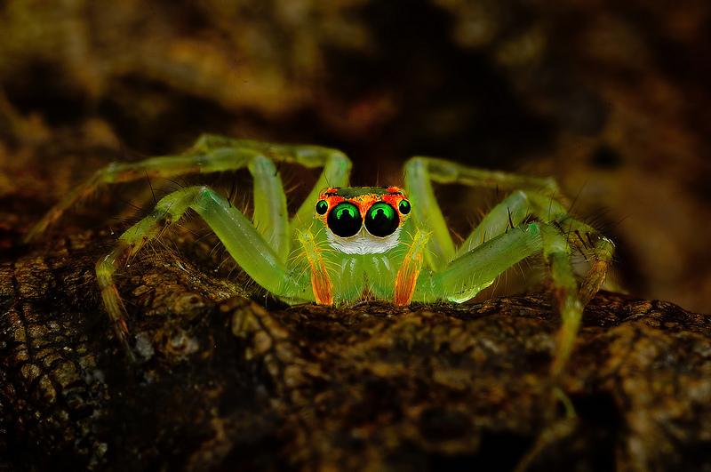 Ochi de paianjeni - Fotografii macro hipnotizante_zuf.ro_ (9)